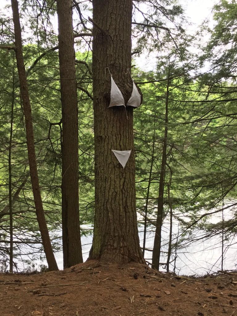 bikini on tree by river